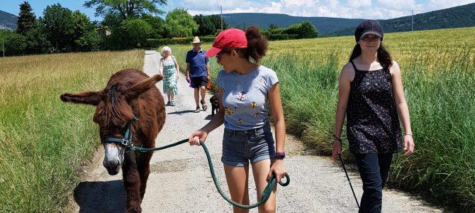 Come and visit a rare Poitou donkey at Les Beaux Chênes